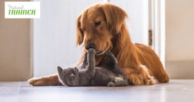 Cibo per cani: qual è il migliore per il proprio animale